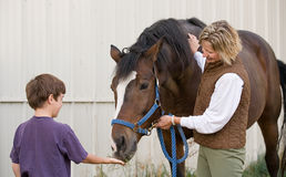 Cavalo de alimentação do menino Foto de Stock Royalty Free