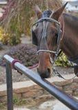 Cavalo de Amish amarrado ao cargo engatando imagens de stock royalty free