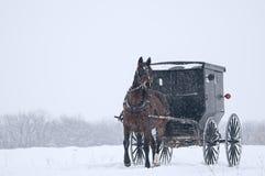 Cavalo de Amish e carrinho, neve, tempestade Imagens de Stock