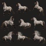 Cavalo de Appy do leopardo, 3d CG Imagens de Stock Royalty Free