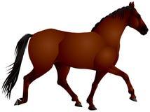Cavalo de baía ilustração stock