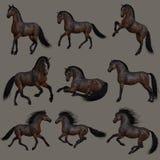 Cavalo de baía de mogno, 3d CG Imagens de Stock Royalty Free