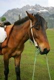 Cavalo de bloco imagens de stock royalty free