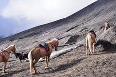 Cavalo de Bromo fotografia de stock