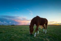 Cavalo 2 de Bronw Foto de Stock