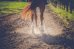Cavalo de Brown na luz solar Foto de Stock
