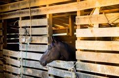 Cavalo de Brown no estábulo no amanhecer Fotografia de Stock Royalty Free