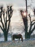 Cavalo de Brown no pasto da exploração agrícola que pasta imagem de stock royalty free