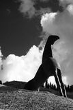 Cavalo de BW artístico Imagem de Stock Royalty Free
