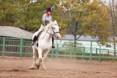 Cavalo de condado da equitação da mulher nova imagens de stock royalty free