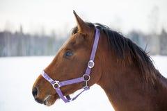 Cavalo de condado no inverno imagens de stock