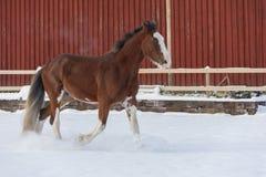 Cavalo de condado no inverno Imagem de Stock Royalty Free