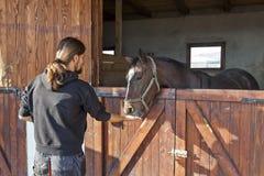 Cavalo de corrida inglês do puro-sangue na caixa 01 Imagem de Stock Royalty Free