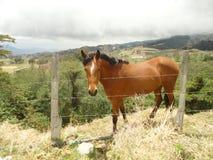 Cavalo de encontro à cerca Fotografia de Stock Royalty Free