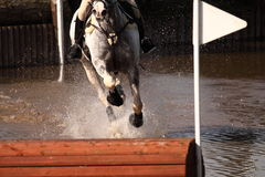 Cavalo de equitação através da água Fotos de Stock