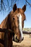 Cavalo de equitação do Arizona fotografia de stock royalty free
