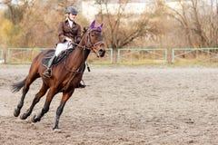 Cavalo de equitação do desportista na competição equestre Imagem de Stock
