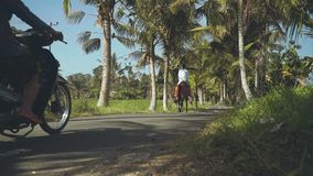 Cavalo de equitação do homem do Balinese na estrada entre as palmeiras, povos em velomotor após ele vídeos de arquivo
