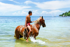 Cavalo de equitação do homem novo na praia na ilha de Taveuni, Fiji Foto de Stock