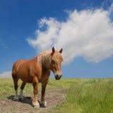 Cavalo de esboço Fotografia de Stock Royalty Free