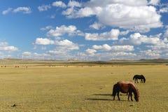 Cavalo de exploração agrícola na pastagem com a exploração agrícola das energias eólicas em Inner Mongolia Foto de Stock Royalty Free