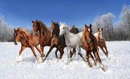Cavalo de galope no inverno Foto de Stock Royalty Free