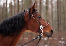 Cavalo de baía foto de stock royalty free