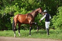 Cavalo de passeio do instrutor no parque do verão Imagens de Stock Royalty Free