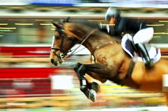 Cavalo de raça Imagem de Stock Royalty Free