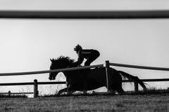 Cavalo de raça Rider Running Imagem de Stock