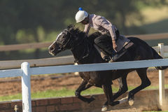Cavalo de raça Rider Training Fotografia de Stock