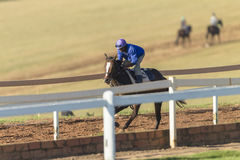 Cavalo de raça Rider Training Fotografia de Stock Royalty Free
