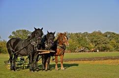 Cavalo de riso fotos de stock royalty free