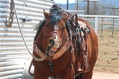 Cavalo de riso Foto de Stock