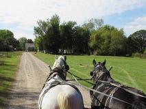 Cavalo de riso Imagem de Stock Royalty Free