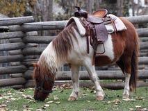 Cavalo de sela Imagem de Stock