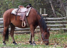 Cavalo de sela Fotos de Stock Royalty Free