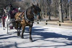 Cavalo de trabalho Imagem de Stock