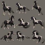 Cavalo de Vanner do cigano, 3d CG Foto de Stock Royalty Free