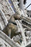 Cavalo de Veneza Imagem de Stock Royalty Free