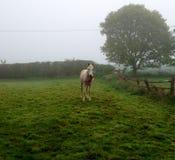 Cavalo de Wellyboot Fotografia de Stock