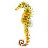 Cavalo de Yellow Sea, cavalo marinho isolado, ilustração da aquarela no branco Imagem de Stock Royalty Free