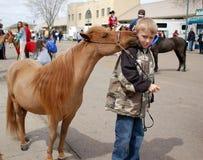 Cavalo diminuto Fotografia de Stock