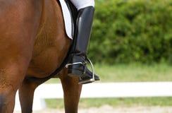 Cavalo do adestramento Fotografia de Stock Royalty Free