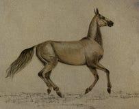 Cavalo do akhal-teke do desenho Fotos de Stock