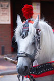Cavalo do casamento foto de stock