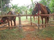 Cavalo do close-up na exploração agrícola Imagens de Stock Royalty Free