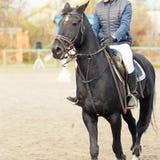 Cavalo do corvo com o jóquei na competição equestre Fotos de Stock