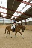 Cavalo do Dressage Foto de Stock Royalty Free