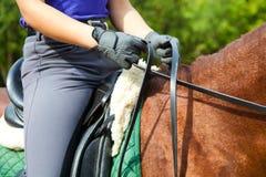 Cavalo do Dressage Fotografia de Stock Royalty Free